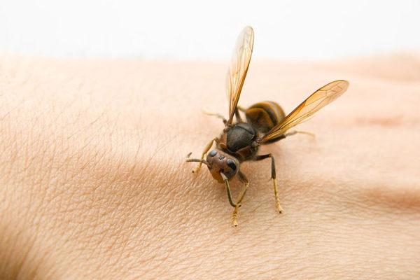 пчела на коже
