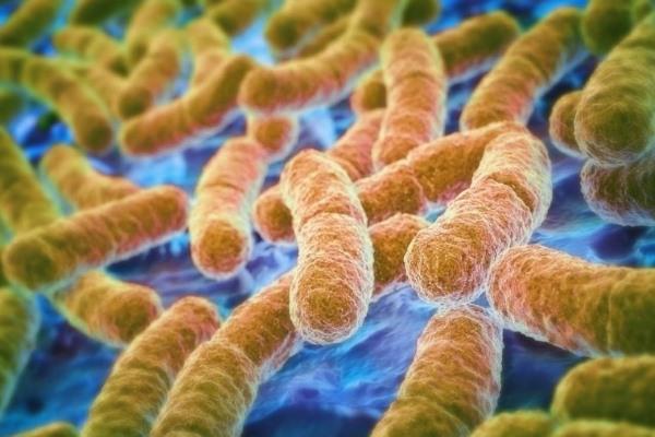 Инфекции, бактерии